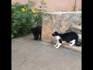 Встретились два давних друга