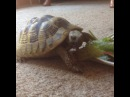 "Fae Raven on Instagram: ""Hungover n feelin rough as fuck after sleeping on my mum's sofa. But tallula the tortoise eating a piece of lettuce is keeping me…"""