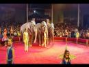 МС НИКС (Андрей ШКАЛОБЕРДОВ) 20 ноября 2016 Оренбург Цирк Шоу Слонов Братьев Гертнер