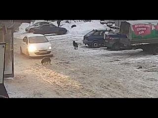 Мразь из Самары специально раздавила собаку , вставшую перед её машиной