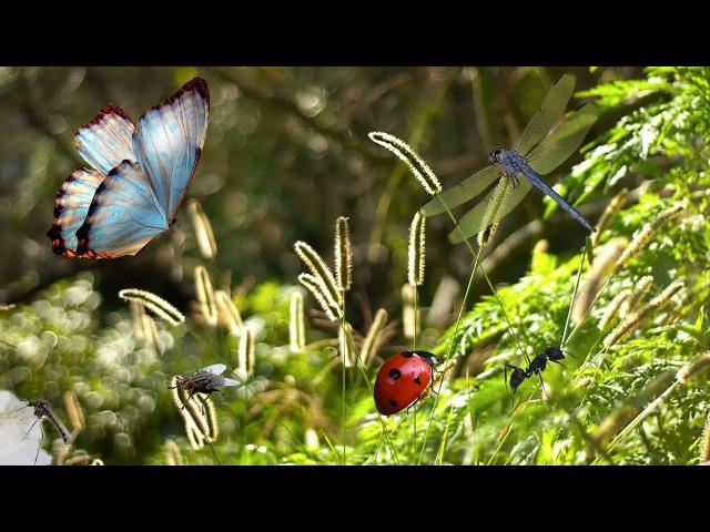 Детям про насекомых Бабочка стрекоза божья коровка муравей муха комар
