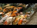 Голод не тетка пирожка не подсунет🍟 рыбки океанариумадлер2017 аленагурьева