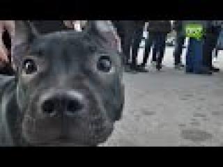 Спустила Бультерьера на котенка: харьковчане требуют отдать под суд живодерку