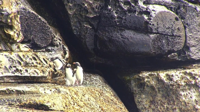 BBC Пингвины Шпион в стае 3 серия