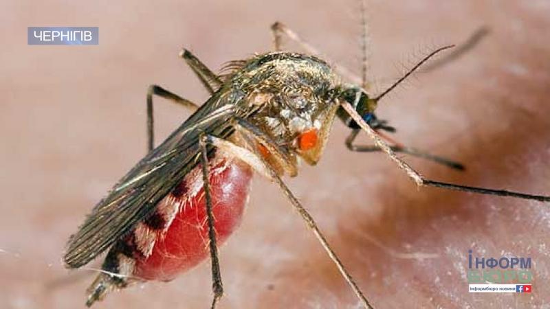 Чернігівщину атакують комарі лікарі оперують перших постраждалих