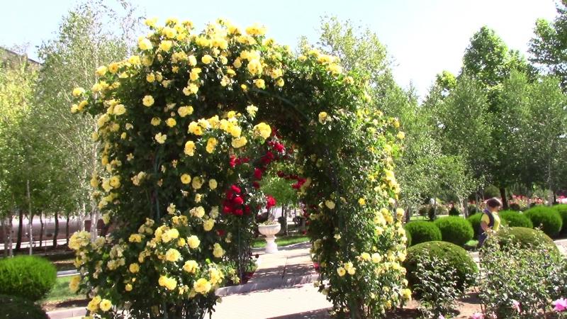Розы и березы санатория Сакрополь