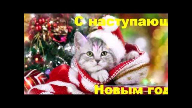Новогодние Котики Обои На Телефон
