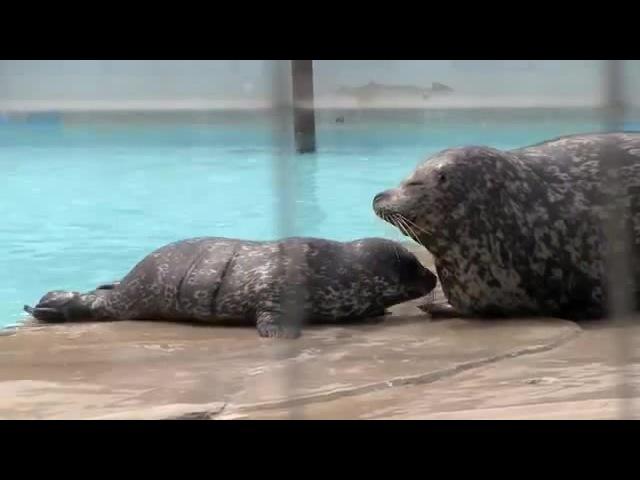 SEAL NURSING