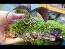Лесной мох для орхидей от Ларисы из Туапсе! Сразу пустила в дело