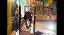 Спортзал для собак в Петербурге - URBAN SAMURAI. Тренировки питбулей и не только
