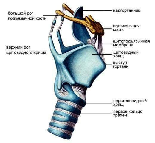 a gerinc hipertóniájának görbülete