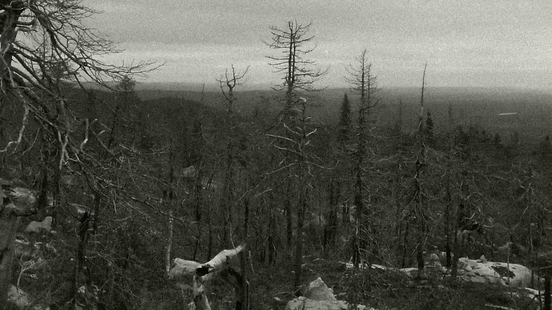 Liveride - Карельский лес