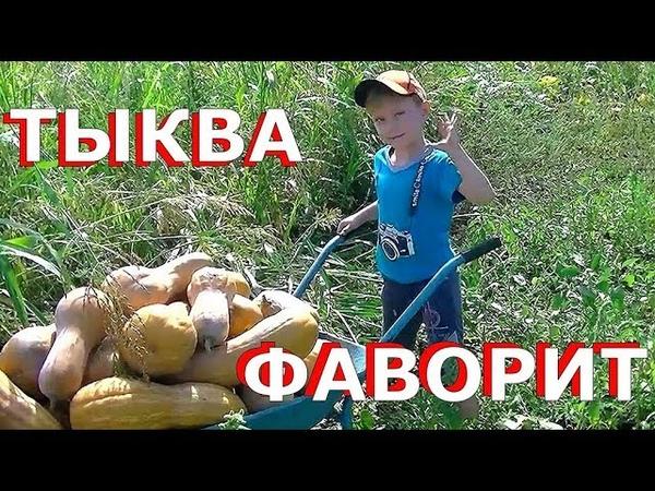 Тыква ФАВОРИТ
