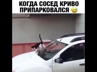 Когда сосед криво припарковался