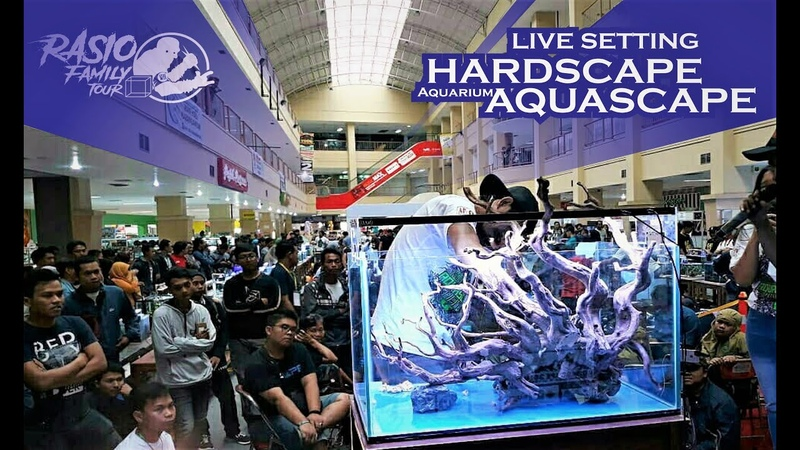 Live Setting Hardscape Aquascape