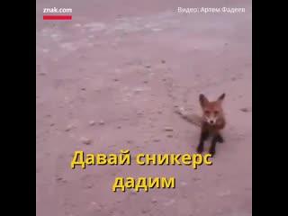 Дикие животные просят у людей пропитания