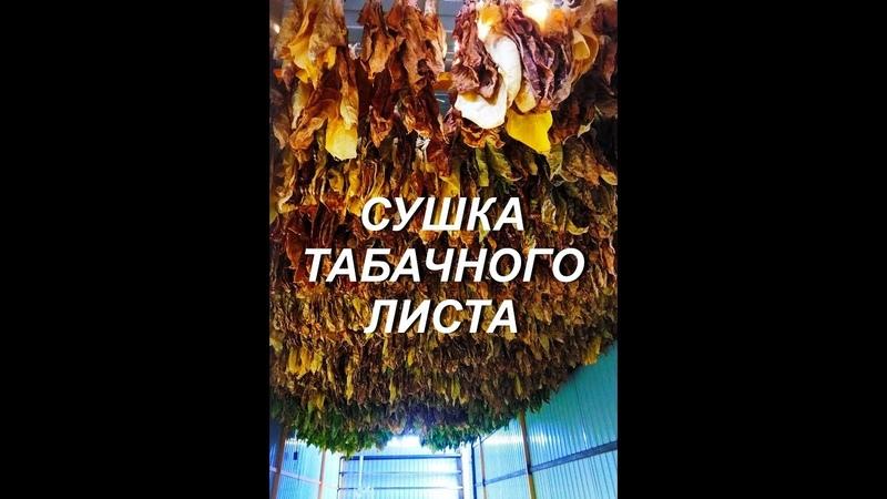 СУШКА ТАБАЧНОГО ЛИСТА № 85 Табак