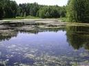 Заростающие озера ледникового происхождения