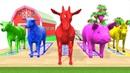 Aprende los Colores Los Animales de granja y Animales Salvajes | Video Educativo Para Niños