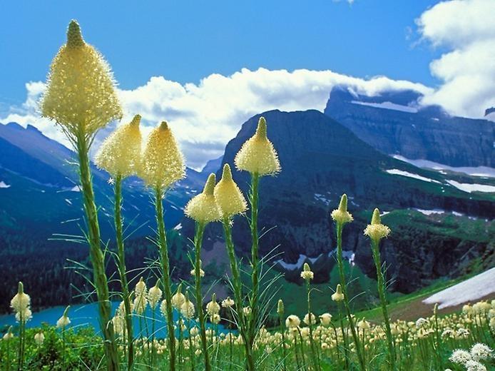Национальный парк Глейшер, изображение №6
