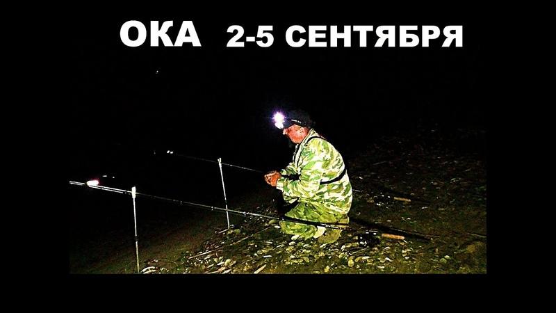 Рыбалка Три ночи с Больничкой и Афиной на территории оккупированной Раками Наш первый Жерех