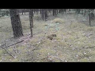 Поехали в лес искать лисички!Прогулка !