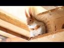 Белка песенки поет Приколы с животными. Смешное видео. Интересное видео. Про зверей. Про белок.