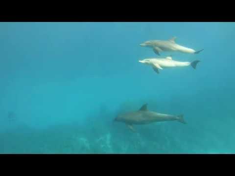 Подводный Мир Хургады. Дельфины Underwater World of Hurghada. Dolphins