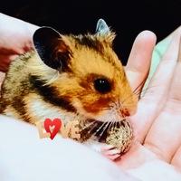 Alisa Easy-Pets-Love