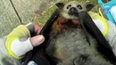 Rescuing a baby flying-fox on the side of a road: this is Moxie