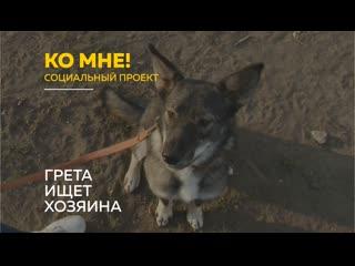 Ко мне!: как воспитывать активных собак и почему Грету вернули в приют