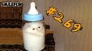 КОШКИ 2019 ПРИКОЛЫ С КОТАМИ Смешные коты и кошки 2019 Funny Cats