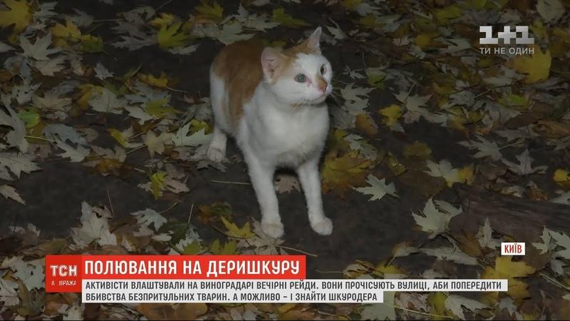 У столиці активісти виходять у вечірні рейди аби попередити вбивства безпритульних тварин