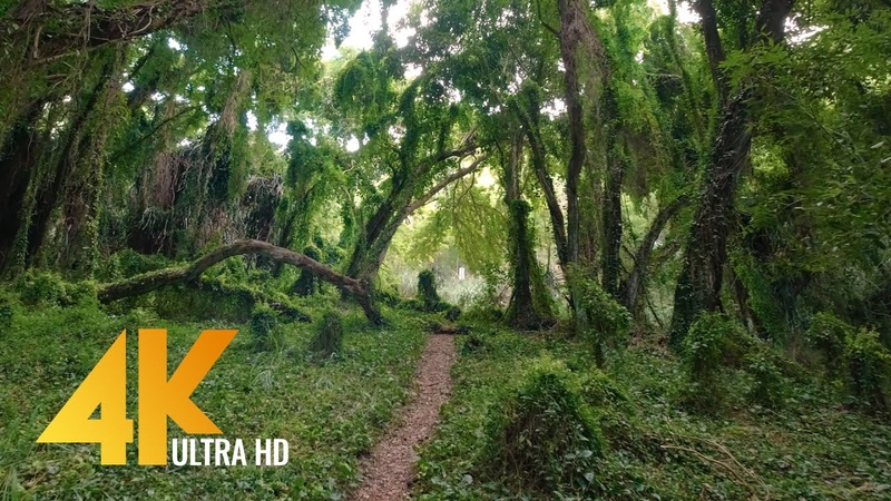 Virtual Walk through a Tropical Forest - 4K Virtual Hike with Nature Sounds