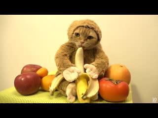 Monkey eating a banana - обезьянка кушает банан