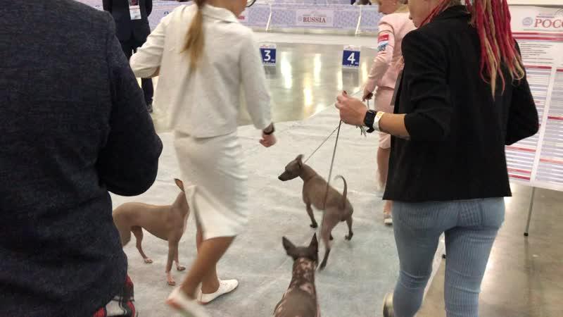 Интернациональная выставка собак «Россия 2019»