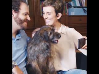 Онлайн-магазин для домашних животных