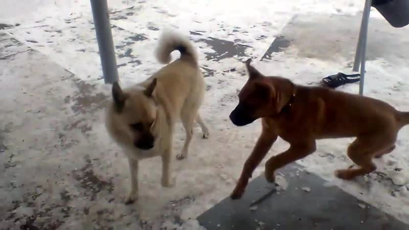 Тузик и Рекс под музыку Ke$ha Blow