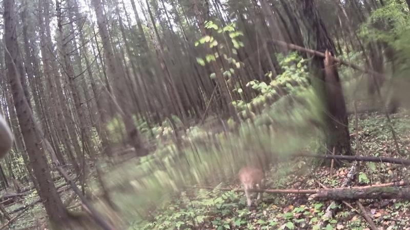Охота на зайца 18 09 19