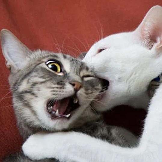 ViXFTAxdIJk - Лучшие коты интернета на этой неделе