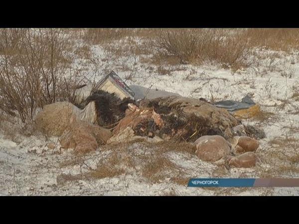 Черногорцы обнаружили у своих домов скотомогильник