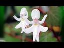 Лучшие виды и сорта комнатных Орхидей. Удивительная красота!