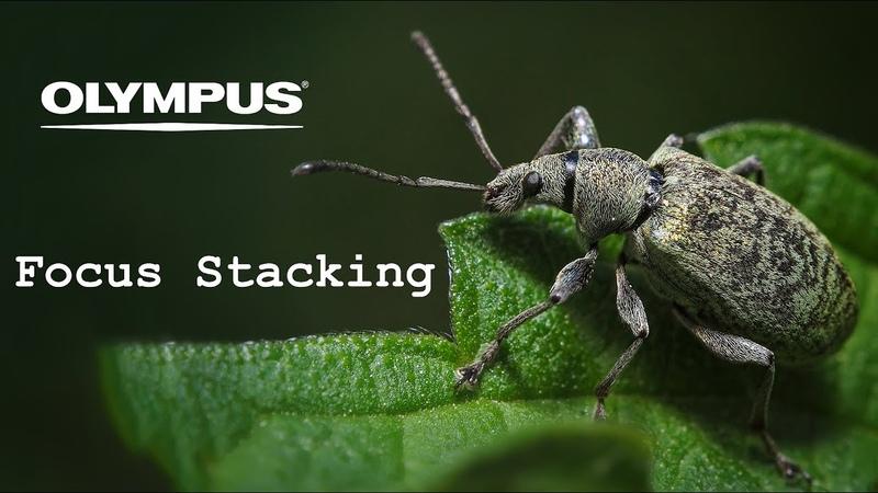 Olympus Focus Stacking