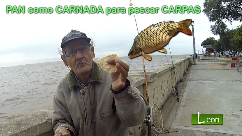 PAN como CARNADA para pescar CARPAS en costanera Norte Leon pesca