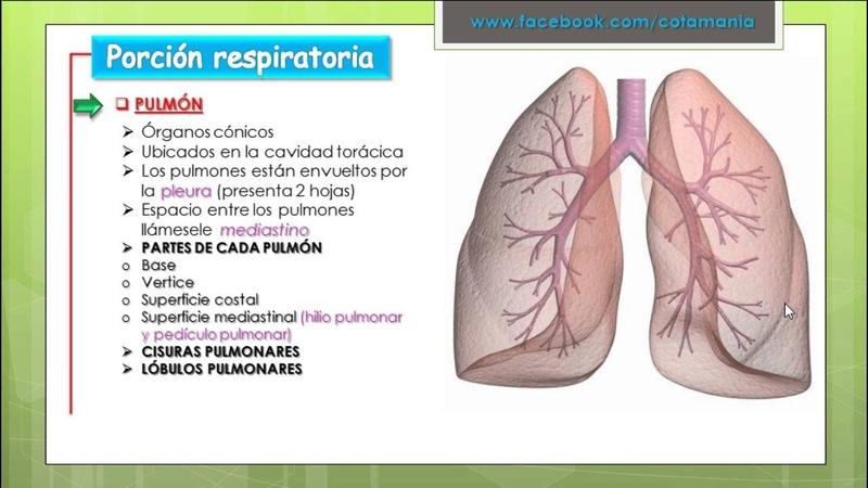 VIDEO REPASO SIST RESPIRATORIO