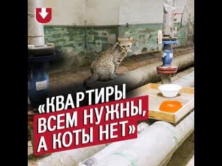 70 котов живет в Эрмитаже. А вы знали