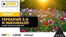 Прямой эфир Гербарий 2.0 и iNaturalist