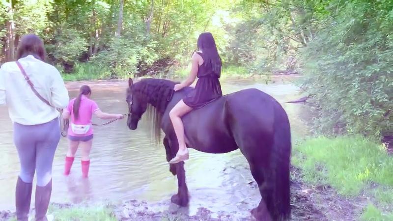 Фотосессия на фризской лошади Wella