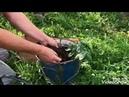 Stiai acest truc de însămănțare a semințelor de morcov?