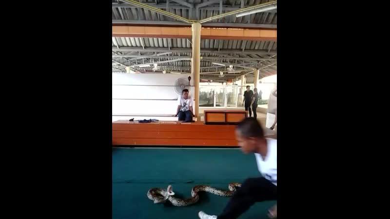 Тайланд Шоу змей